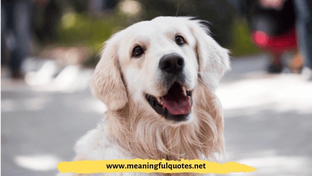 funny dog names from movies