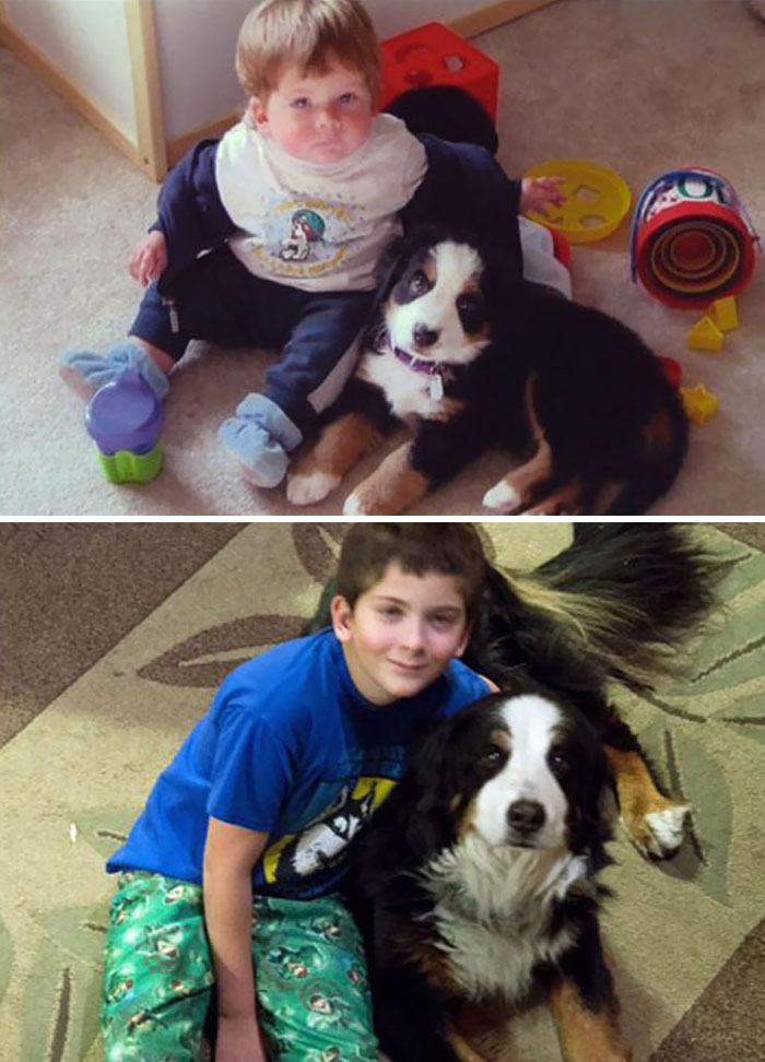 30 Heart-Warming Photos Of Dogs Growing Up Together With Their Owners - Dylan Was About 14 Months Old And Kobe Was About 9 Weeks In The First Picture. Now Dylan Is 12 And Kobe Is 11