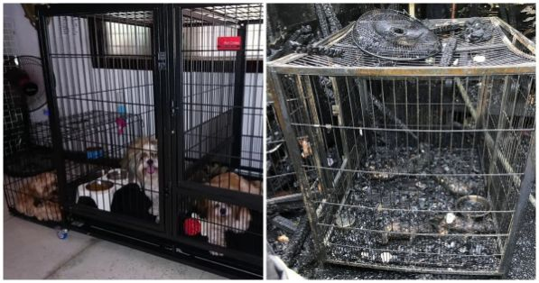 Woman dies trying to save 9 dogs from house fire