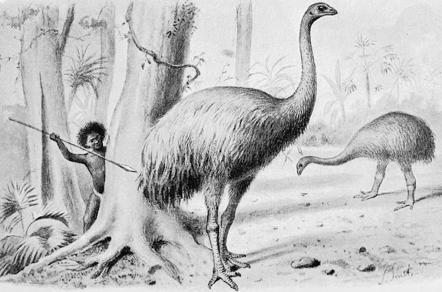 Flightless birds more common globally before human-driven extinctions