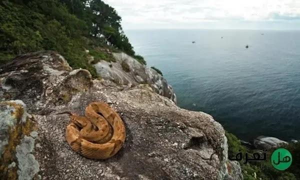 جزيرة الافاعي في البرازيل