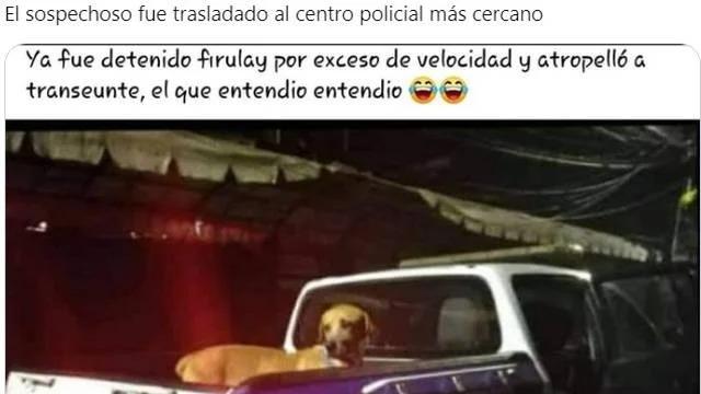 Perrito atropella a un humano y se desatan los memes