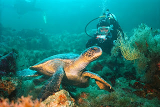 Los 5 mejores lugares para bucear en las islas Galápagos