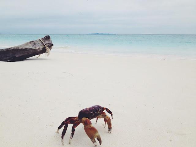 กิจกรรมท่องเที่ยว เกาะตาชัย : เล่นน้ำที่ชายหาด,  ดำน้ำตื้น-น้ำลึกดูปาการัง, เดินตามเส้นทางศึกษาธรรมชาติเพื่อชมปูไก่, เที่ยวจุดชมวิวด้านหลังเกาะ,