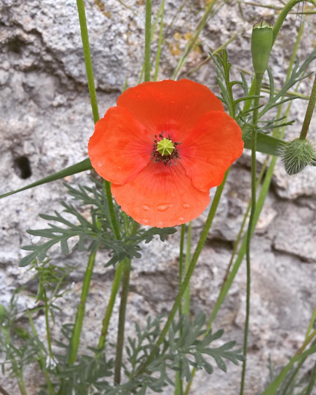 Casa edera la mia storia d 39 amore con erbe e tarocchi for Una casa di storia con seminterrato