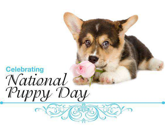 National Puppy Day Wishes pics free download