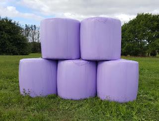 सायलेज(मुरघास) निर्मिती फायदेशीर जोडधंदा : दुग्धउत्पादन वाढीबरोबर व्यवसायाची संधी silage production www.shtisalla.com