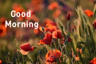 Good Morning Wallpaperhd