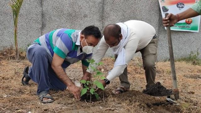 """जन हितकारी संगठन के कार्यकर्ताओं ने  """"वन महोत्सव"""" मनाया"""