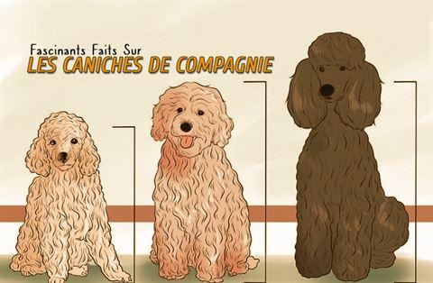 Fascinants Faits Sur Les Caniches De Compagnie.
