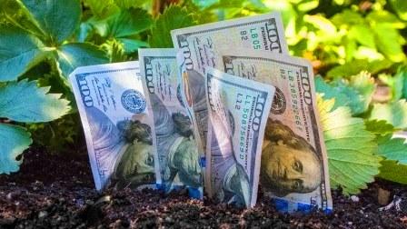 Топ инвестиции 2021 года. Зачем вкладывать деньги в сельское хозяйство?