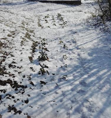 orto-di-febbraio-sperimentale