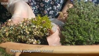 Gardeners' World Thyme