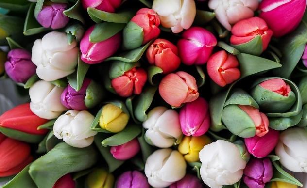 Tips Menjaga Bunga Agar Selalu Terlihat Segar