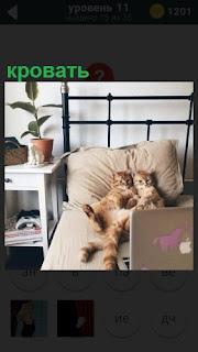 Две кошки устроились на кровати и смотрят внимательно ноутбук
