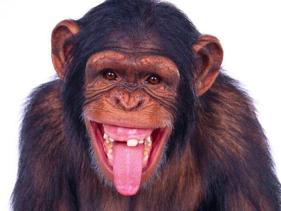 Lustige Affen Bilder Kostenlos