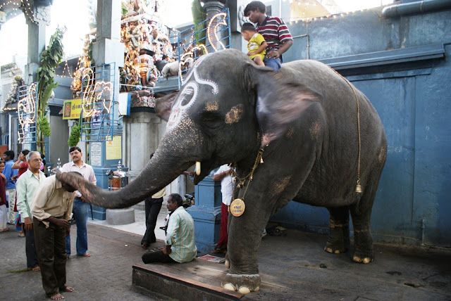 Elephant blessings - Arulmigu Manakula Vinayagar Temple - Pondicherry , India -Pick, Pack, Go