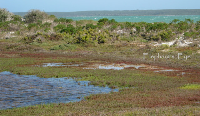 Marsh and Langebaan Lagoon in the West Coast National Park