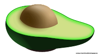 avocado illustrations