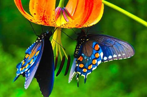 मेरे एहसास की तितली