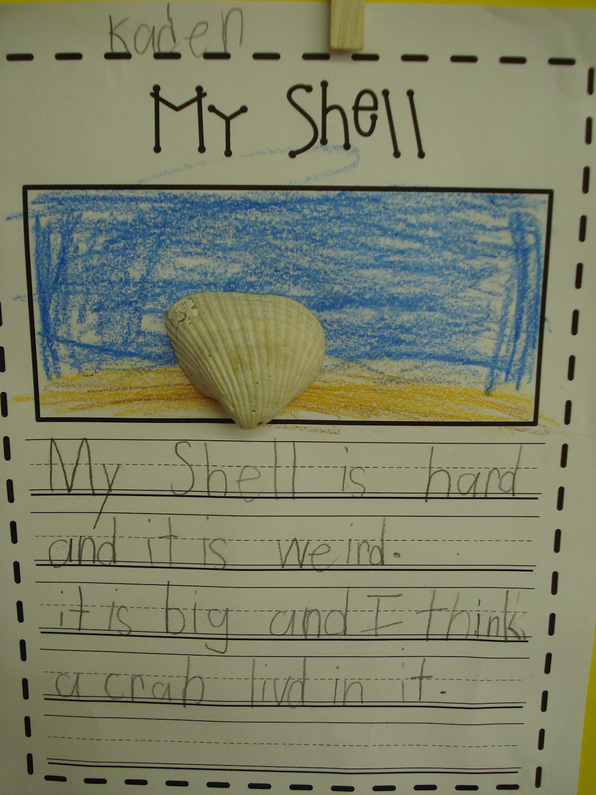 Shells And New Math Centers
