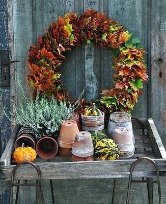 Φθινοπωρινές Προτάσεις για τον Κήπο ή το Μπαλκόνι σας