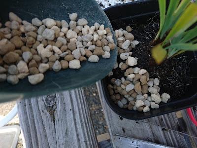 植え付け 用土