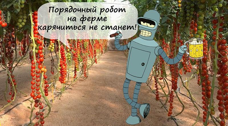 робот Бендер в теплице с помидорами