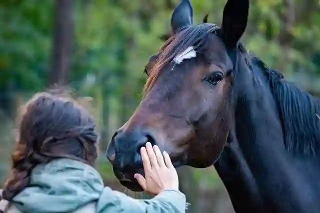 130 Shocking Facts About Horse in Hindi You Didn't Know