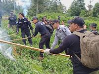 Bareskrim Musnahkan Lahan Ganja 10 Hektar di Aceh Besar