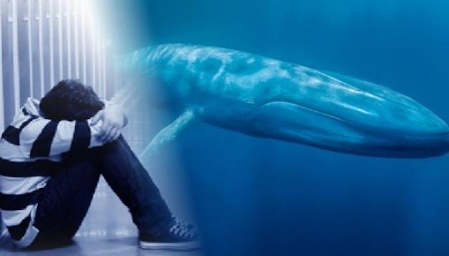 Curiosidades sobre a baleia-azul: Vocês devem conhecer muita gente de boca e língua grande, não é mesmo ?. Mas nenhuma tão grande quanto estas!  - Uma língua de baleia-azul pesa algo em torno de 2,7 toneladas, equivalente ao peso de um elefante. - Sua boca, quando completamente expandida, é capaz de reter até 90 Toneladas de alimento e água.   - A cabeça de uma baleia-azul é tão grande que cinquenta pessoas poderiam apoiar-se em sua língua.