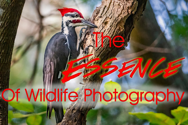 The Essence of Wildlife Photography