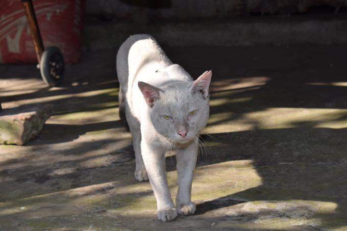 Matured tommy cat photos | White colored | 2021