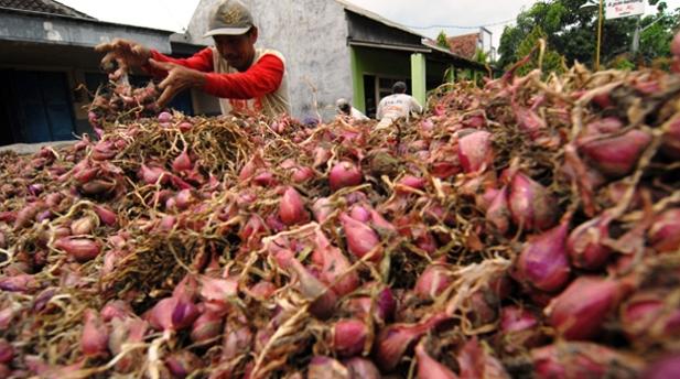 Pemerintah Dorong Peningkatan Ekspor Bawang Merah ke Singapura dan Thailand