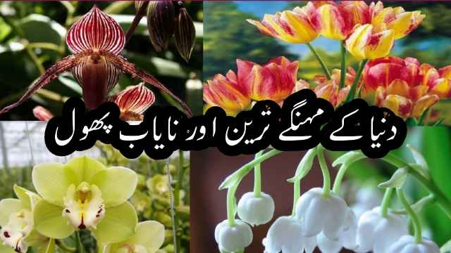 most-expensive-flowers-urdu-hindi-dilchasp-maloomat