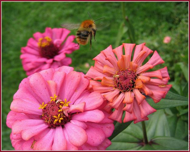 Online Çiçekçiler: En Kolay Çiçek Siparişi