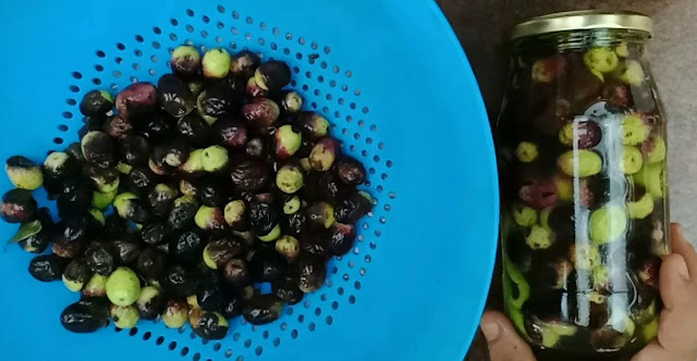 طريقة بسيطة تخليل الزيتون الاسمر كبس الزيتون الشيف محمد الدخميسي