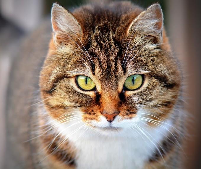 ¿Los gatos afectan a la energía de los signos?