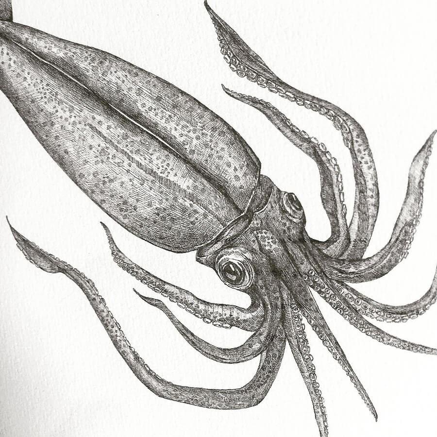 06-Arrow-Squid-Rachel-Lee-www-designstack-co