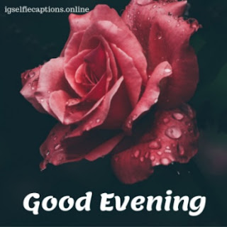 good evening image with red rose