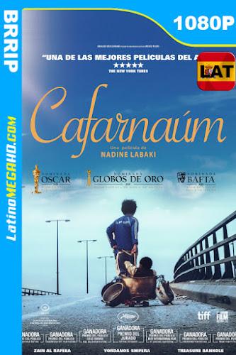 Capharnaüm (2018) Latino HD 1080P ()