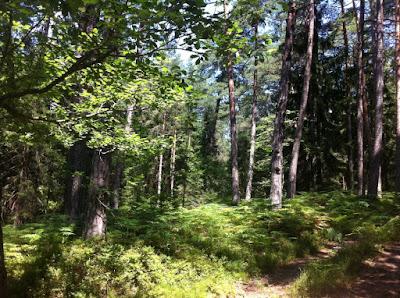 Waldfläche Kaufen