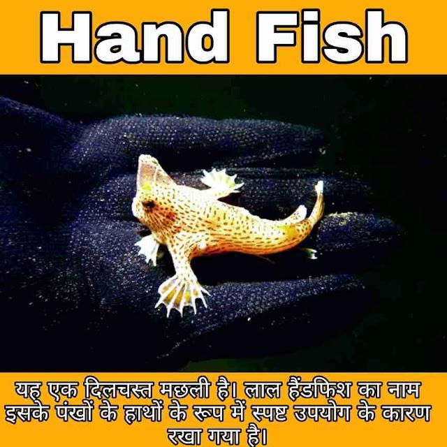 What is Hand Fish in Hindi - हाथ वाली मछली क्या है ?