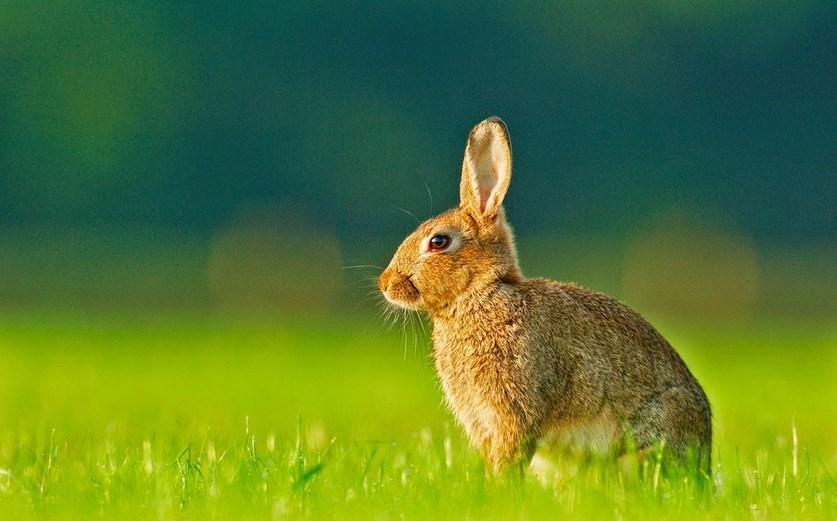 foto Foto dan gambar imut kelinci anggora lucu lucu ternak kelinci hias kelinci hias kelinci merawat kelinci