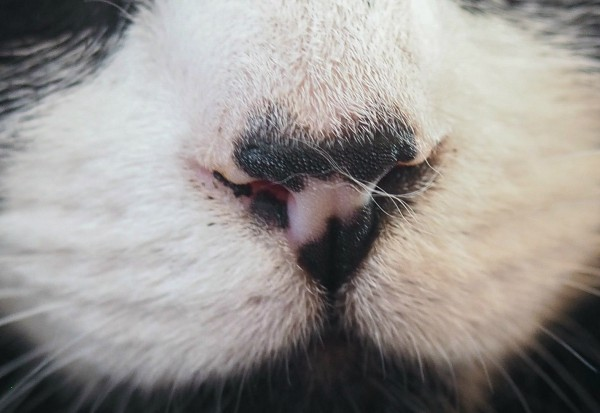 cute cat noses