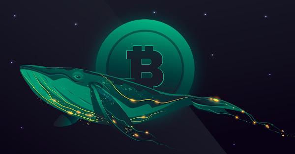 bitcoin balinaları Çin'in kripto yasağından sonra daha fazla kripto para biriktirmeye başladı