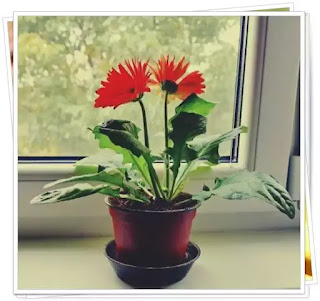 plante de apartament benefice care aduc noroc potrivite pentru apartament