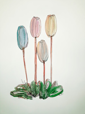 Assorted Tulip Flowers Miabo Enyadike