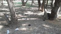 Мусор в роще Астраханская область