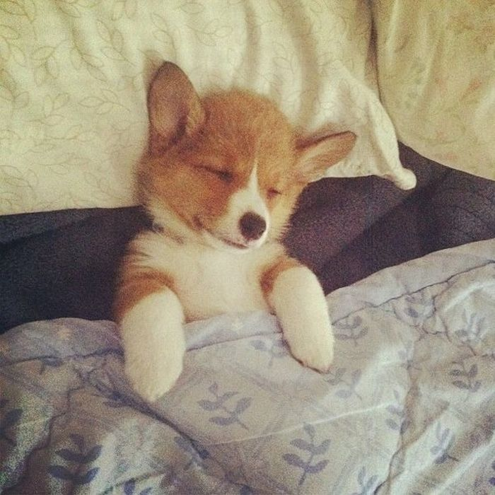 Cute dog - part 217, cute dog pictures, best dog photos